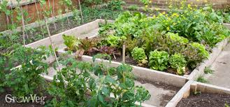 Permaculture Vegetable Garden Layout Planting Systems For Vegetable Gardens