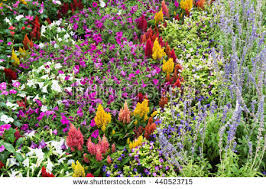 garden flowers stock images royalty free images u0026 vectors
