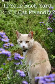 poisonous plants for cats your complete cat safety guide