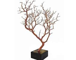 manzanita branches for sale manzanita branches etsy