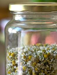 how to harvest chamomile hobby farms