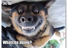 Funny Cat And Dog Memes - 11 best funny cats and dogs images on pinterest funny animal