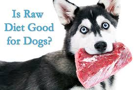 raw food diet recipes for our pets