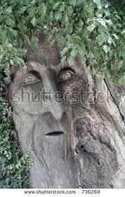 carved tree trunk treebeard lord stock photo 730268