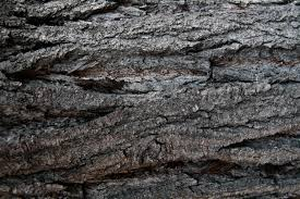 17 hi res tree trunk textures texture fabrik