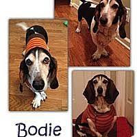 bluetick coonhound rescue georgia marietta ga pet adoption basset hound rescue of georgia has