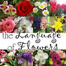 The Language Of Flowers Gifts With Style The Language Of Flowers Blue I Style