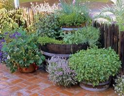 Herb Garden Winter - chives winter savory thyme basil oregano tarragon and sage