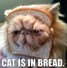 Cat In Bread Meme - very funny cat memes and 1 cat gif album on imgur