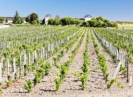 learn about st estephe bordeaux chateau calon segur bordeaux appellations wine st estephe