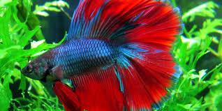 freshwater aquarium fish for beginner ivelfm house