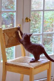 How To Keep Cats Off Outdoor Furniture by Cat Scratching Solutions Please Do Not Declaw Catscratching Com