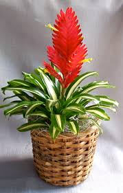 potted flowers examples potted flowering plants near the