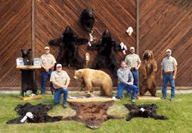 Bears Montana Hunting And Fishing - ringleader of montana s largest bear poaching case banned from