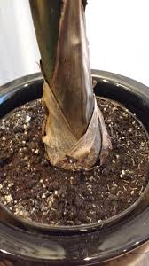 pests and diseases forum small worms in indoor palm tree soil
