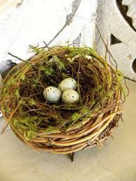 natural nest embellished with moss and tiny blue eggs along with