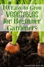 10 easy to grow vegetables for beginner gardeners easy gardens