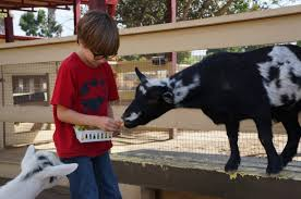 pumpkinpalooza at zoomar u0027s petting zoo oc mom blog