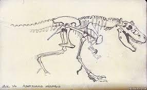 dinosaur fossil sketch 2 by allosaurilium on deviantart