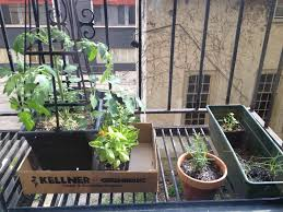 what i learned from my first garden u2014 strong towns