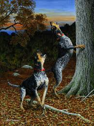 bluetick coonhound origin bluetick coonhound click on picture to view full size image