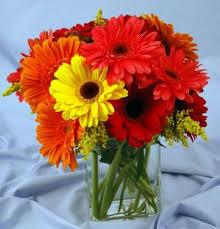 gerbera daisies gerbera vase kremp