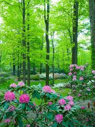Backyard Trees For Shade - best plants under big trees growing plants plants and flower stands