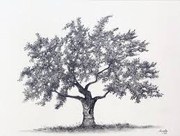 apple tree graphite drawing by aakritiarts on deviantart