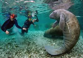 California snorkeling images 11 best snorkeling spots in america ecowatch jpg