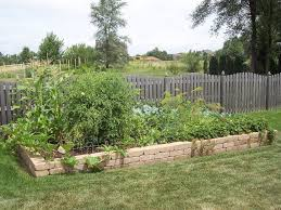 greener designs how to grow a winter vegetable garden in southern