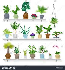 set vector indoor plants on shelves stock vector 652117420