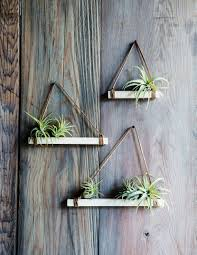 easy diy air plant trapezes plants air plants and gardens