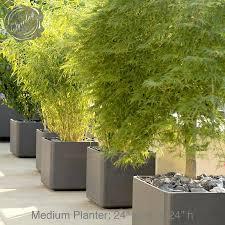 mid century modern plants designsell download solidaria garden