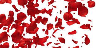 Rose Petals Rose Petals By As 100 Videohive