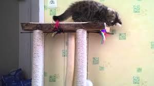 comment fabriquer un arbre a chat elessar sur son arbre à chat fait maison youtube
