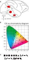 effects of luminance contrast on the color selectivity of neurons download figure