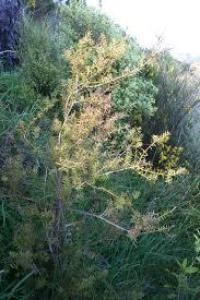 native plants christchurch te papa u0027s blog native re vegetation u0026 weed collecting in