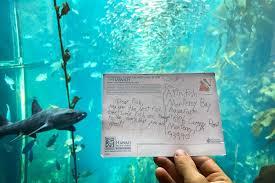 aquarium fish at monterey bay aquarium receive fan postcard animal blog