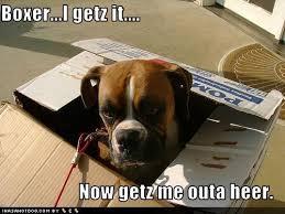 boxer dog meme gotta u0027 love u0027em boxer forum boxer breed dog forums