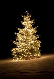 using christmas trees in a winter landscape watters garden center