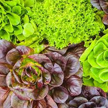 best shade tolerant vegetables organic gardening mother earth news