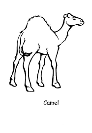 coloring page camel coloring pages 8 clip art library