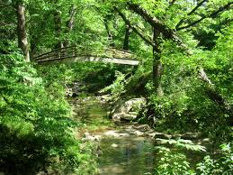 Unca Botanical Gardens 5 Outdoor Wedding Venues Near Asheville Nc