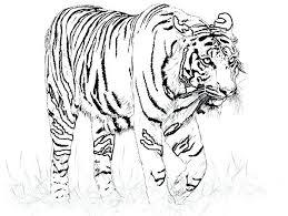 Printable Tiger Coloring Pages Cute Tiger Cub Coloring Page Coloring Pages Tiger