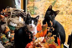 bea s book nook cat thursday happy thanksgiving