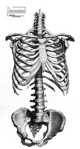 spooky skeleton png