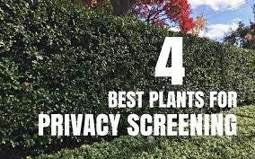 Landscaping Ideas For Privacy Garden Design Garden Design With Privacy Ideas For Yard On