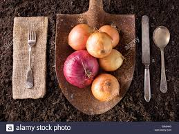 farm to table concept organic farm to table healthy eating concept on soil background