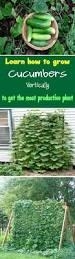 How To Plant Vertical Garden - best 25 garden ideas ideas on pinterest backyard garden ideas