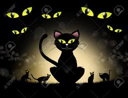 halloween cats background halloween black cat photo album black cat halloween stock images